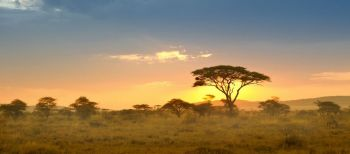 Vacation Courses in Sud Africa